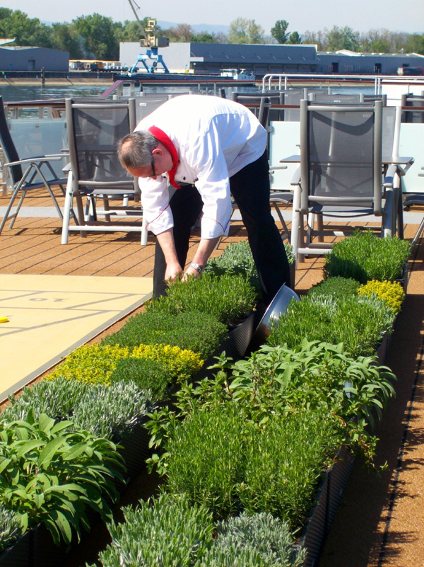 Viking chef gathering herbs for dinner from the on-deck herb garden—a feature of all new Viking